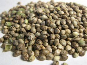 семена марихуаны посадить