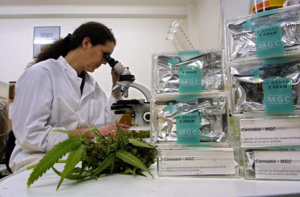 вырастить марихуану дома